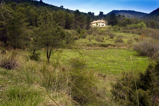 Grüne Natur umgibt die Finca