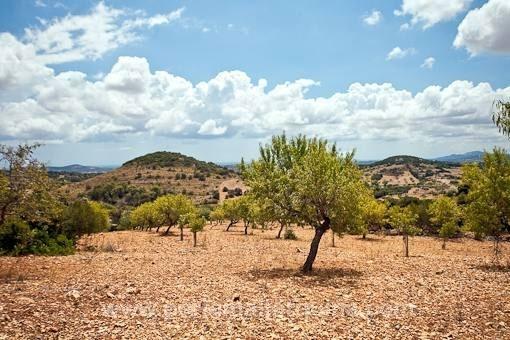 Typisch mallorquinisches Finca-Grundstück