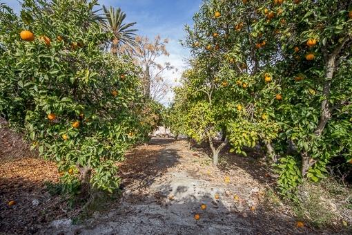 Garten mit Obstbäumen
