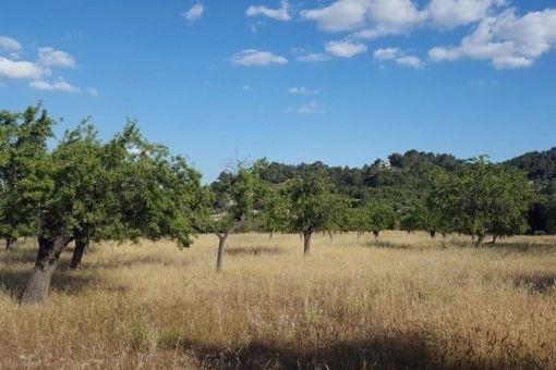 Grundstück in Selva