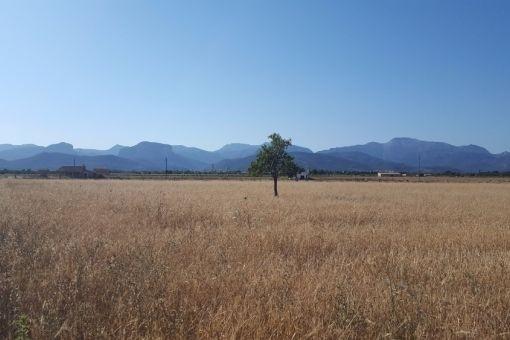 Grundstück in Binissalem