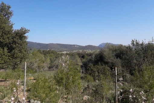 Grundstück in Campanet