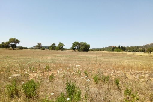 plot in Porreres