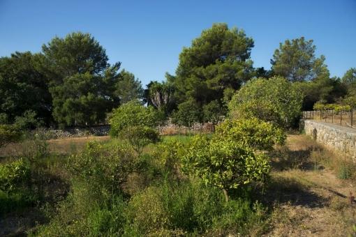 Gartenbereich des Anwesens