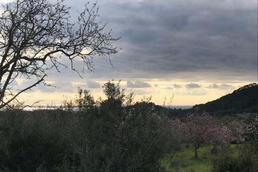 Grundstück in S'Horta