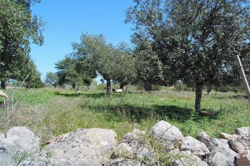 Grundstück in San Lorenzo