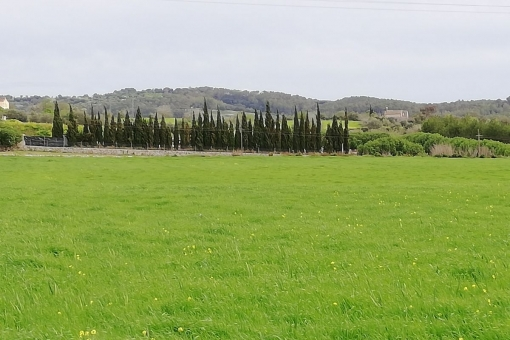 plot in Lloret de Vista Alegre
