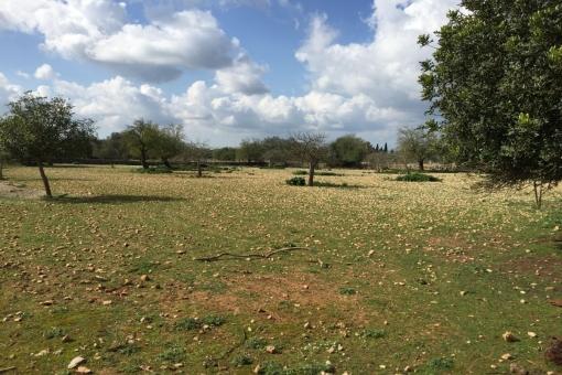 Grundstück in Lloret de Vista Alegre
