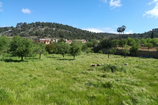 Grundstück in Calvia