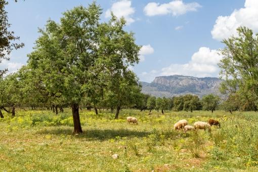 Grundstück in Valldemossa