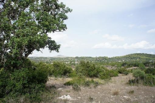 Grundstück in Son Servera