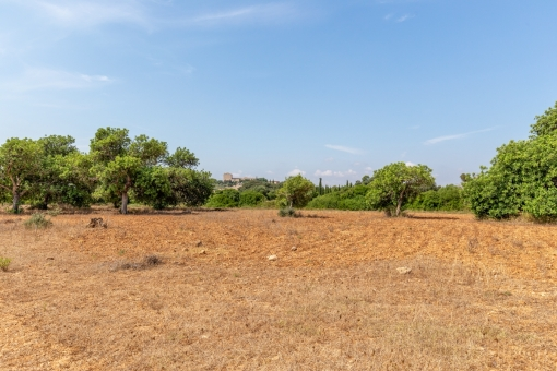 plot in San Lorenzo
