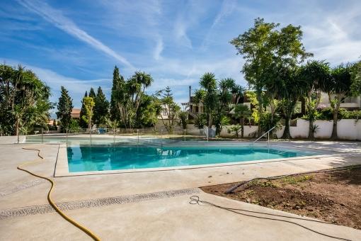 Poolbereich umgeben von Palmen