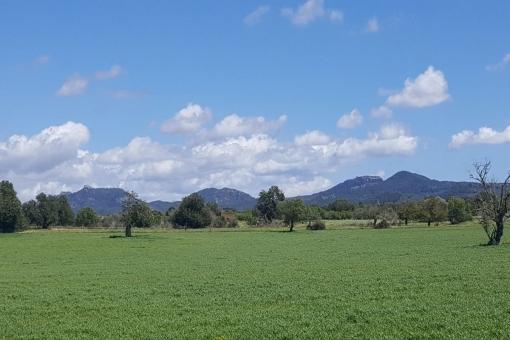 Grundstück in Cas Concos