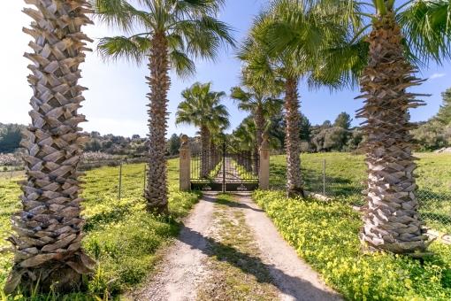 Imposante Auffahrt mit Palmen