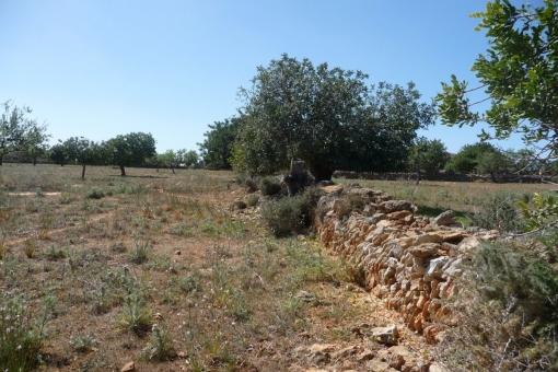 plot in S'Horta