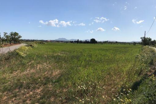 Grundstück in Campos