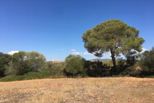 plot in Cala d'Or