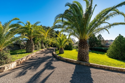 Drive way of the finca