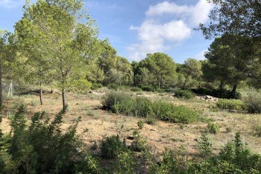 Grundstück in Santa Ponsa