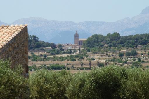plot in Sant Joan