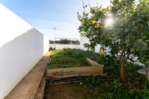 Garden with fruit trees