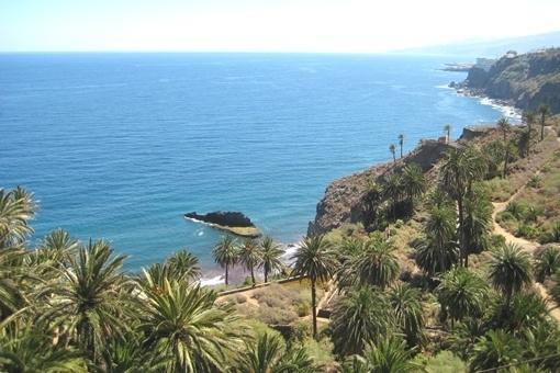 Malerischer Palmenhain vor Puerto de la Cruz